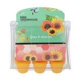 mini greenhouse zonnebloemen