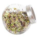 Kiempot pikante salade